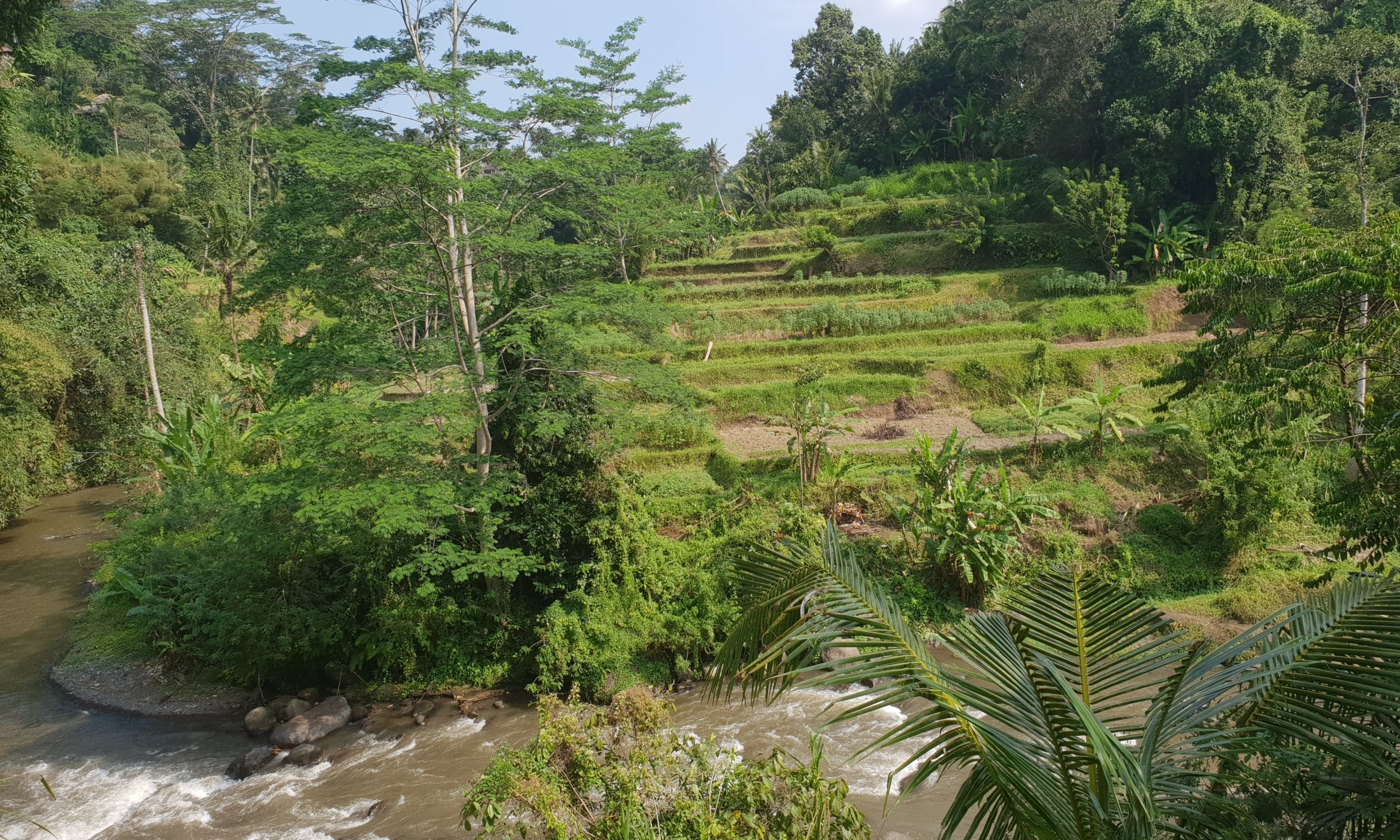 Ayung River - Access by stairs